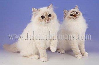 image kittens-jpg