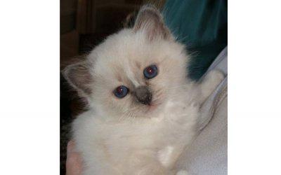 image kitten-jpg