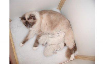 image pansy_kittens-jpg